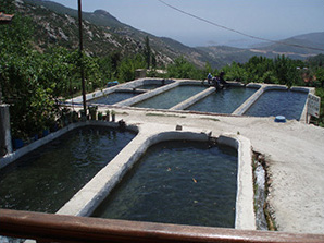 Trout farms in Kalkan